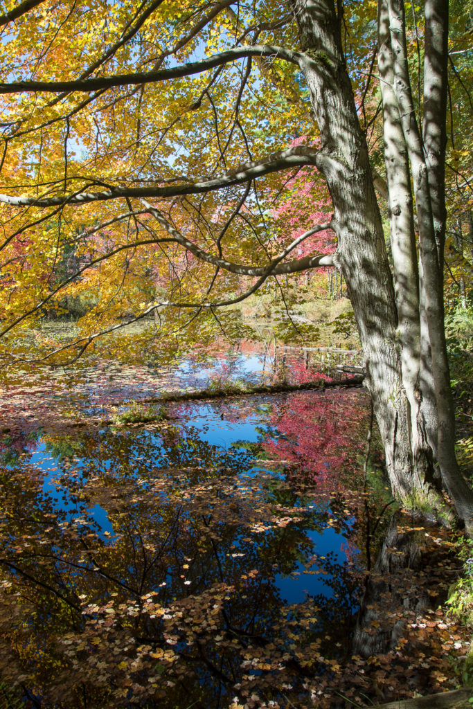 Tree with Fall Reflections by Sandy Renna