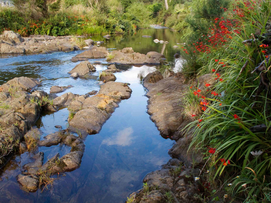 Red Flowers, Stream, New Zealand