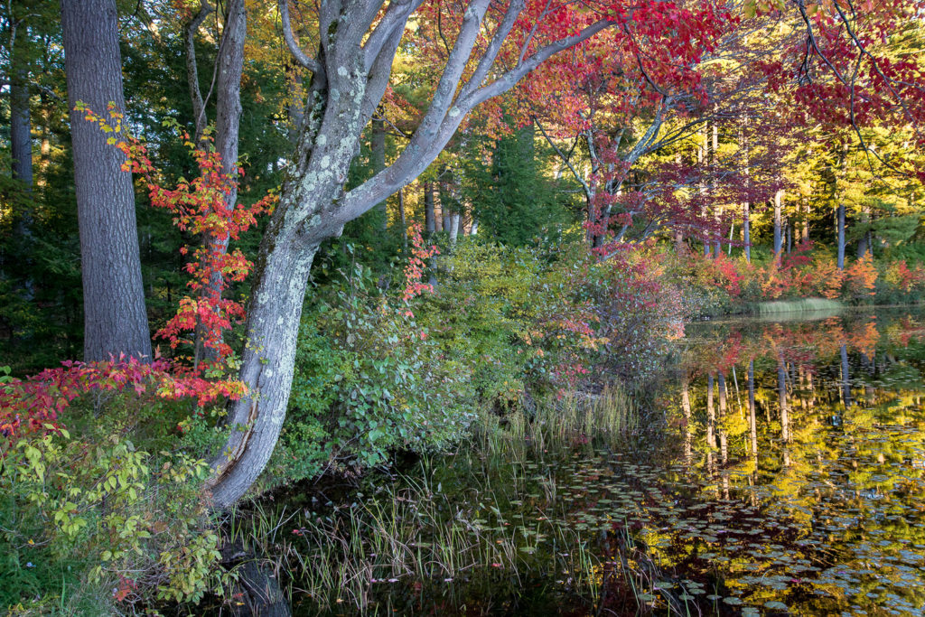 Fall Pond Reflections by Sandy Renna