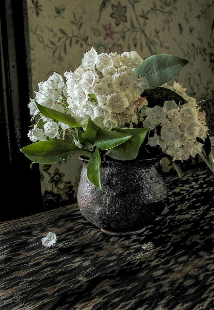 Laurel Blossoms