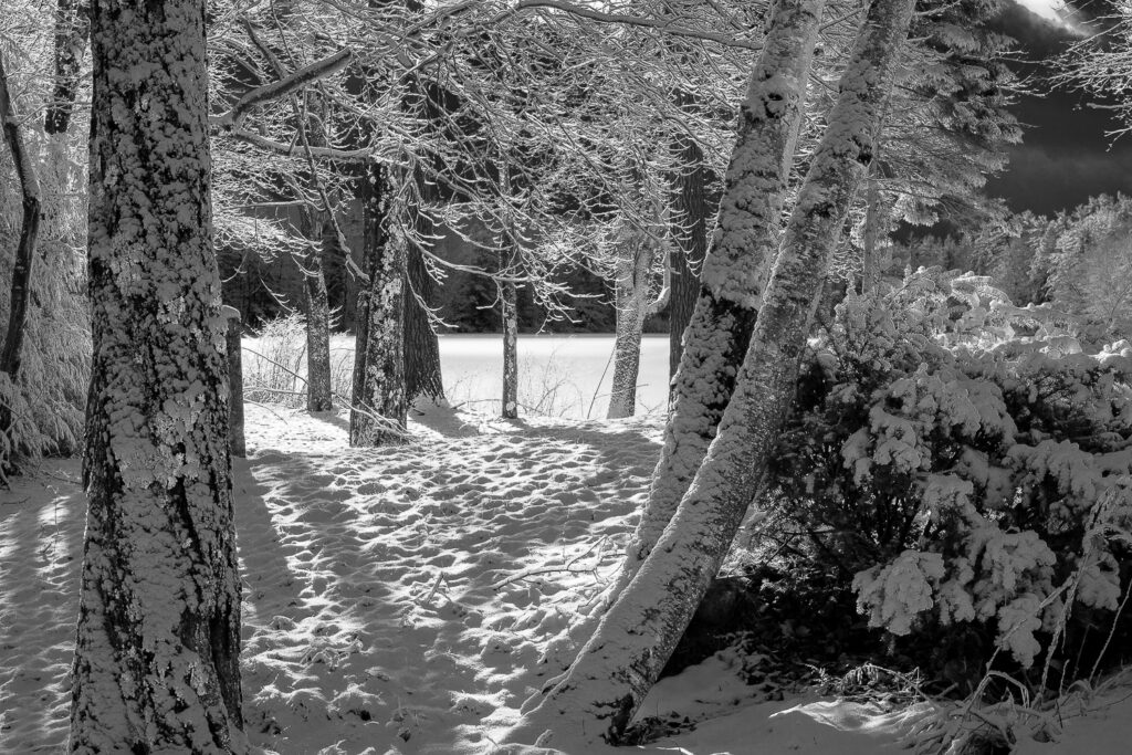First Snow. Infrared filter